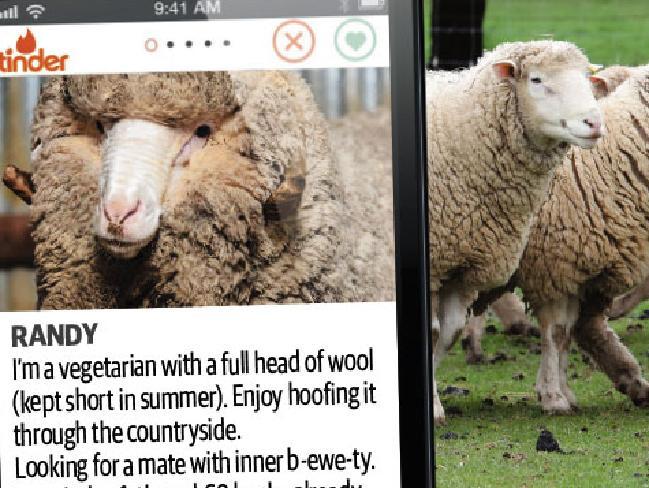 Tinder for sheep image.jpg