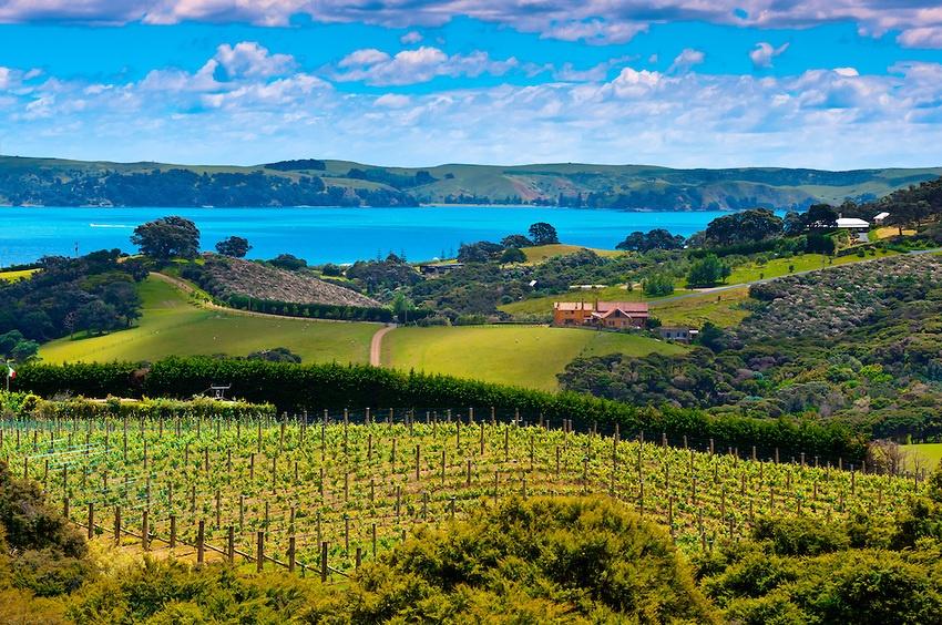 New_Zealand_Viticulture.jpg